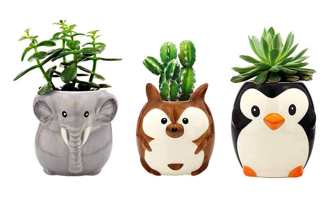 Grow Your Love Fern in These Cute Planters | InStyleRooms.com/Blog